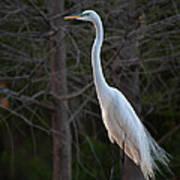 Evening Egret 2 Vertical Poster
