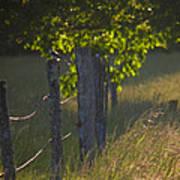 Evening Hunt Poster