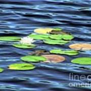 Evening Lake With Water Lily Poster