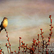 Evening Mocking Bird Poster