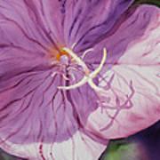 Evening Primrose Flower Poster