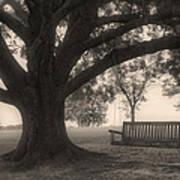 Evening Swing - Oak Tree - Altus Arkansas Poster