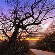 Evening Tree Poster by Debra and Dave Vanderlaan