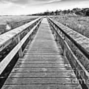 Everglades Trails Poster