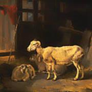 Ewe And Lambs Poster