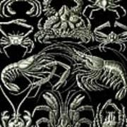 Examples Of Decapoda Kunstformen Der Natur Poster
