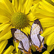 Exotic Butterfly Poster