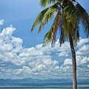 Exotic Palm Tree Poster