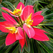 Exotic Red Flower Poster