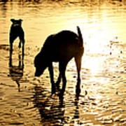 Exploring At Sunset Poster