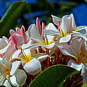 Expressions Of Love - Plumeria Poster