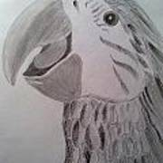 Expressive Parrot Poster