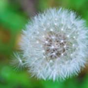 Extra Little Dandelion Wish Poster