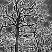 Extreme Contrast Bare Trees During Winter Photograph Poster