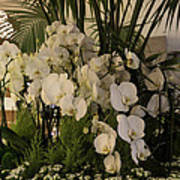 Exuberant Orchid Display Poster