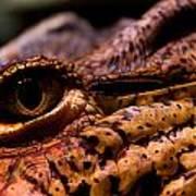 Eye Of The Dragon Poster