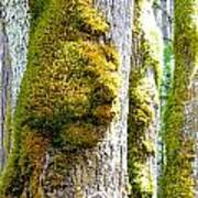 Face In The Moss Poster
