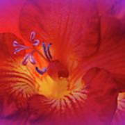 Fade To Freesia - Iridaceae Poster