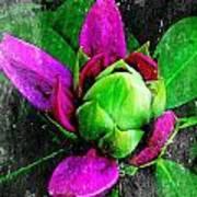 Fairy Bloom  Poster by Natalya Karavay