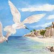 Fairy Terns Ladigue Poster