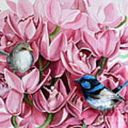 Fairy Wrens And Orchids Poster