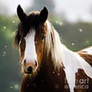 Fairytale Pony Poster