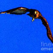 Falcon In Blue Poster