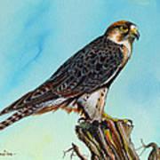 Falcon On Stump Poster