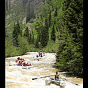 White Water Rafting On The Animas Poster