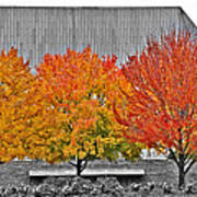 Fall At The Mann Poster