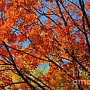 Fall Beauty Poster