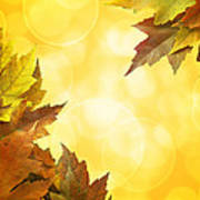 Fall Color Maple Leaves Background Border Poster