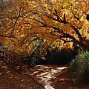 Fall Color Path Poster
