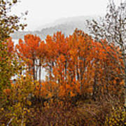 Fall Color Snow Storm Poster