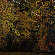 Fall Color Trees V9 Pano Poster