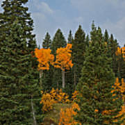 Fall Colors 2 Greeting Card Poster