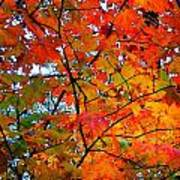 Fall Colors 2014-4 Poster
