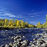 Fall Colors Along The Naches River Poster