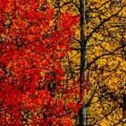 Fall Colors Dp Poster