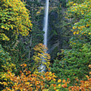 Fall Colors Frame Multnomah Falls Columbia River Gorge Oregon Poster