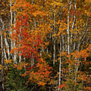 Fall Colors Greeting Card Poster