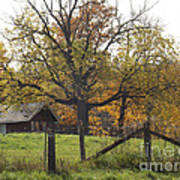 Fall Foilage In Country Poster