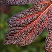 Fall Foliage 4 Poster
