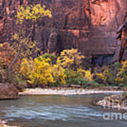 Fall Foliage Along The Virgin River Poster