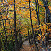 Fall Foliage Colors 03 Poster