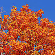 Fall Foliage Colors 19 Poster