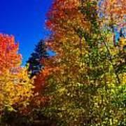 Fall Foliage Palette Poster