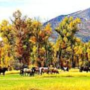 Fall Grazing Poster