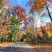Fall In Cades Cove Poster