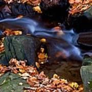 Fall In Rock Creek Park Poster